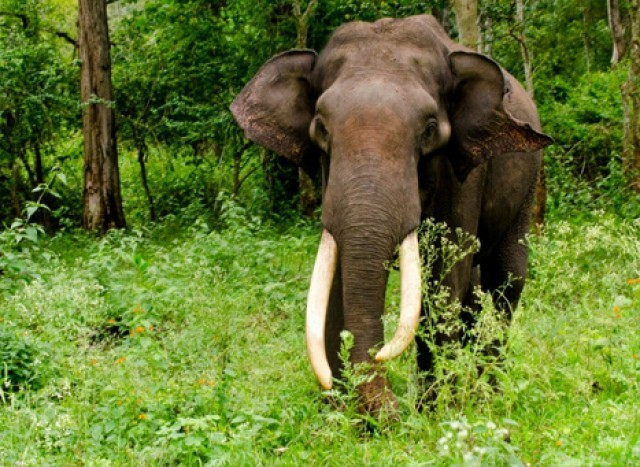 EnMal_Elephant-qqSBabVMxX.jpg