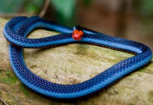 blue corel-jMnmmSZ8d2.jpg