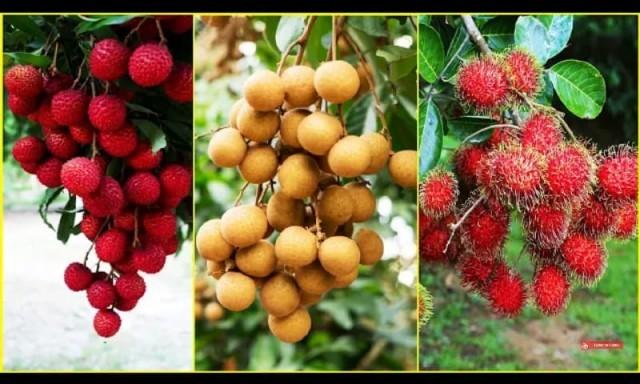 fruit-72eiEH7GyW.jpg