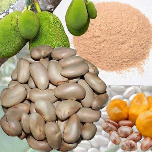 jack fruit seed-snXHb2VW4d.jpeg