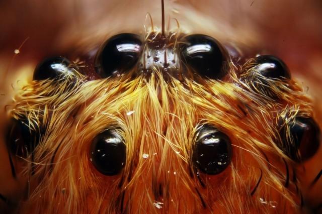 spider-eyes-qWBjnnpPuU.jpg